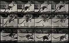 A kangaroo jumping. Photogravure after Eadweard Muybridge, 1 Wellcome V0048783.jpg