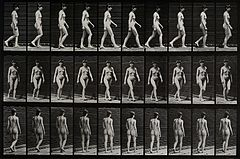 A woman walking. Photogravure after Eadweard Muybridge, 1887 Wellcome V0048621.jpg