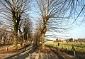 Abdij van Herkenrode, geleide lindedreef - 375552 - onroerenderfgoed.jpg