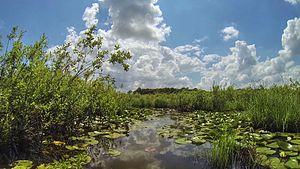 Acarlar Floodplain Forest - Acarlar Floodplain Forest.