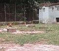Agodi Garden Ibadan26.jpg
