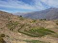 Agricultural terraces, Cabanaconde, Peru.jpg