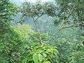 Air Terjun Jenar Dilihat dari Kebun Kopi Jollong - panoramio.jpg