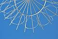 Airport Frankfurt - Fraport - Flughafen Frankfurt - barbed wire and fence - Stacheldraht und Zaun - 02.jpg