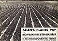 Allen's book of berries for 1943 (1943) (17763748020).jpg