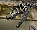 Allosaurus (15490257487).jpg