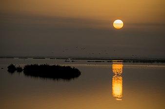 Amanecer en Doñana.jpg