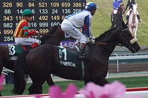 horse racing handicap