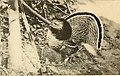 American game-bird shooting (1910) (14569008777).jpg