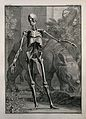 An écorché figure, front view. Wellcome V0008303.jpg