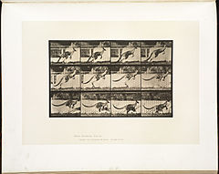 Animal locomotion. Plate 752 (Boston Public Library).jpg