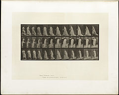 Animal locomotion. Plate 97 (Boston Public Library).jpg