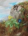 Anna Stainer-Knittel - Alpine Flowers.jpg