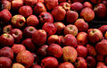 Apples Fruits Horticulture Agriculture produce India.jpg