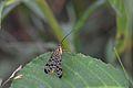 Araignées, insectes et fleurs de la forêt de Moulière (Les Chirons Noirs) (29011153286).jpg