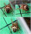 Araneus diadematus (4566532168).jpg