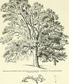 Arboretum et fruticetum britannicum, or - The trees and shrubs of Britain, native and foreign, hardy and half-hardy, pictorially and botanically delineated, and scientifically and popularly described (14780841341).jpg