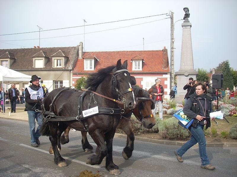 File:Ardennais belges RP2012.JPG