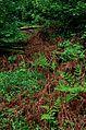 Armadale Castle - gardens 8.jpg