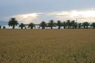 Ebro Delta - Agricultural fields in the delta.