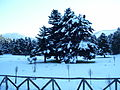 Arvanitsa snow.jpg