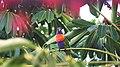 Australia Parrot (Unsplash).jpg
