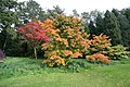 Autumn Maples - geograph.org.uk - 1245363.jpg