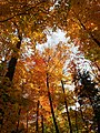 Autumn at Algonquin Provincial Park.jpg