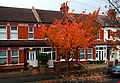 Autumn in Orchard Rd, SUTTON, Surrey, Greater London.jpg