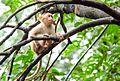 Baby Monkey Matheran.jpg