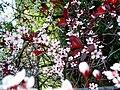 Backyard flowers (145909088).jpg