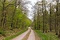 Bad Wünnenberg - 2019-04-25 - PB-060 Leiberger Wald (15).jpg
