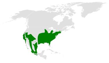 Baeolophus distribution map