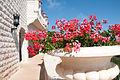 Baha'i Garden, Haifa (3756376419).jpg