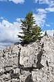 Banff Sulphur Mountain IMG 4216.JPG