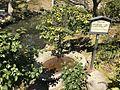 Banzai Washbasin in Shukkei Garden.jpg