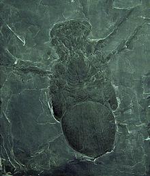 "Big Spider"" by Jaime Jones (aka Terrifying Presence ..."