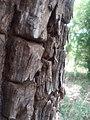 Bark in woods.jpg