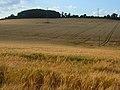 Barley, Longstock - geograph.org.uk - 906009.jpg