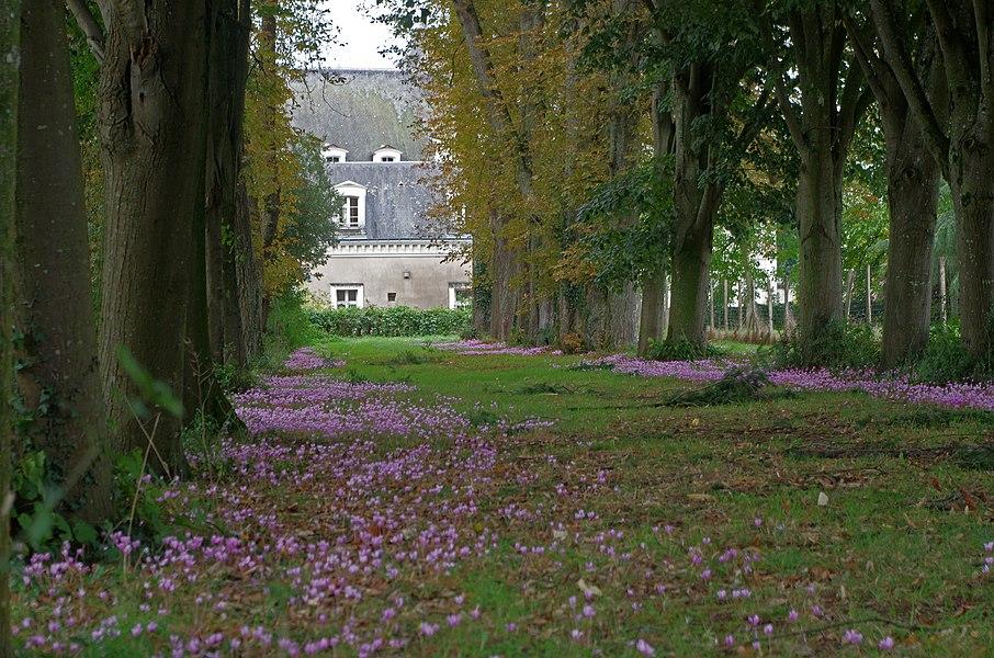 Beaupréau (Maine-et-Loire)  Le parc du château (Parc Ducal ou Parc du Bois du Coin)   D'une superficie de 32 ha, le parc permet une randonnée facile sur une disatnce d'environ 8 km.  Le parc a été acquis par la commune en 2003. Il est ouvert au public à partir de 8h30. La fermeture le soir est variable suivant la saison.