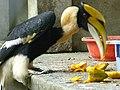 Beauty with Beak.jpg