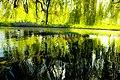 Beddington Park in the Spring, London Borough of Sutton.jpg