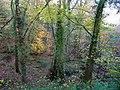 Beech wood near Taddiport - geograph.org.uk - 1590019.jpg