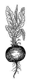 Beet (PSF).png