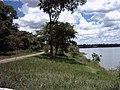 Beira do lago paranoa - vegetação - panoramio.jpg