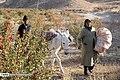 Berberis 13960722 21.jpg