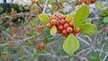 Berries (1922977285).jpg