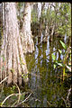 Big Cypress National Preserve BICY1059.jpg