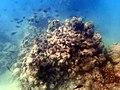 Big Island Reef (24027306146).jpg