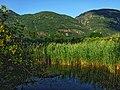 Biotope Lake of Gargazzone - Photo by Giovanni Ussi - Lake and surrounding vegetation (1) 12.jpg